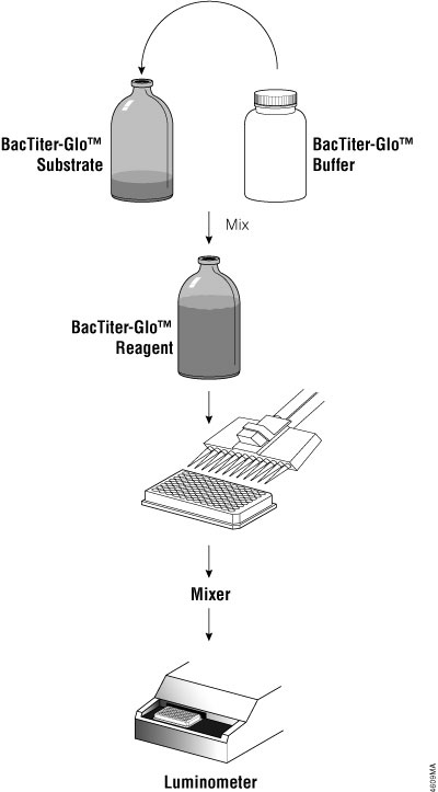 Schematic diagram of BacTiter-Glo™ Assay protocol.