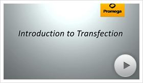 transfection01-poster