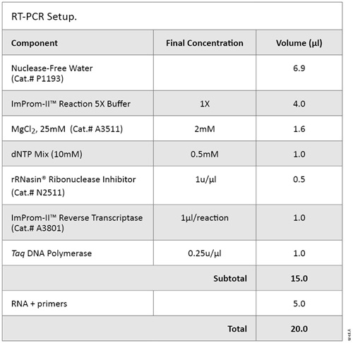 RT-PCR Setup.